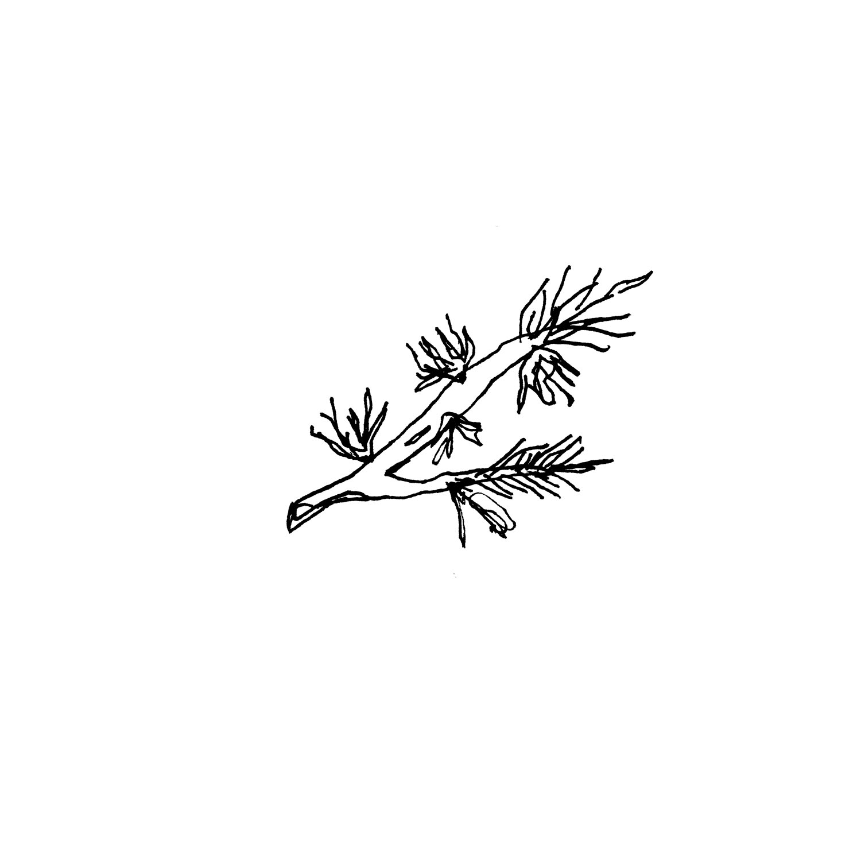 olivia stramara