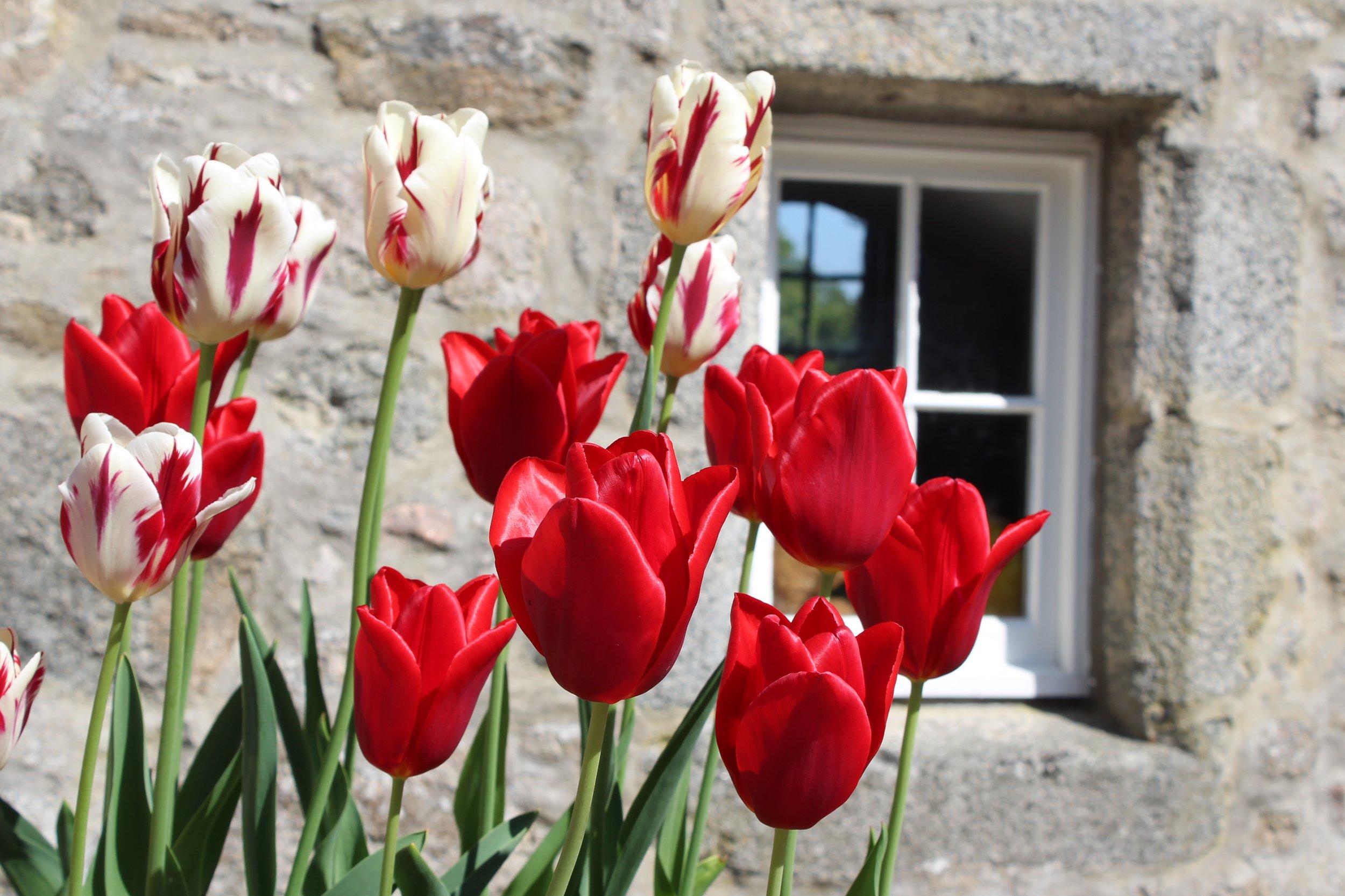 Spring at Castle Fraser, Scotland
