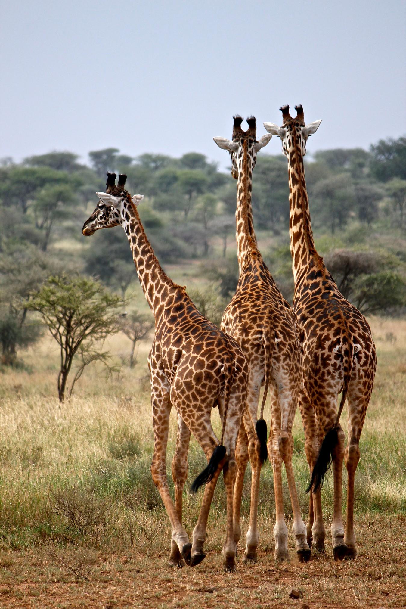 life_in_kenya