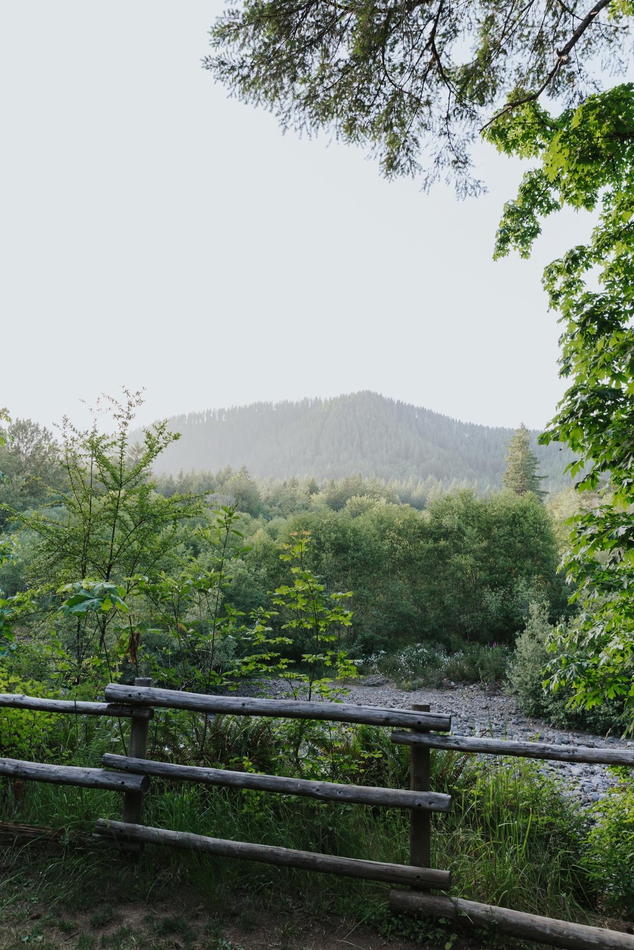 107_Ragan&Max-2658_Oregon_Forest_Smith_Wedding_Tillamook_Oregon-Forest-Wedding_Homestead_Tillamook-Forest-Wedding.jpg