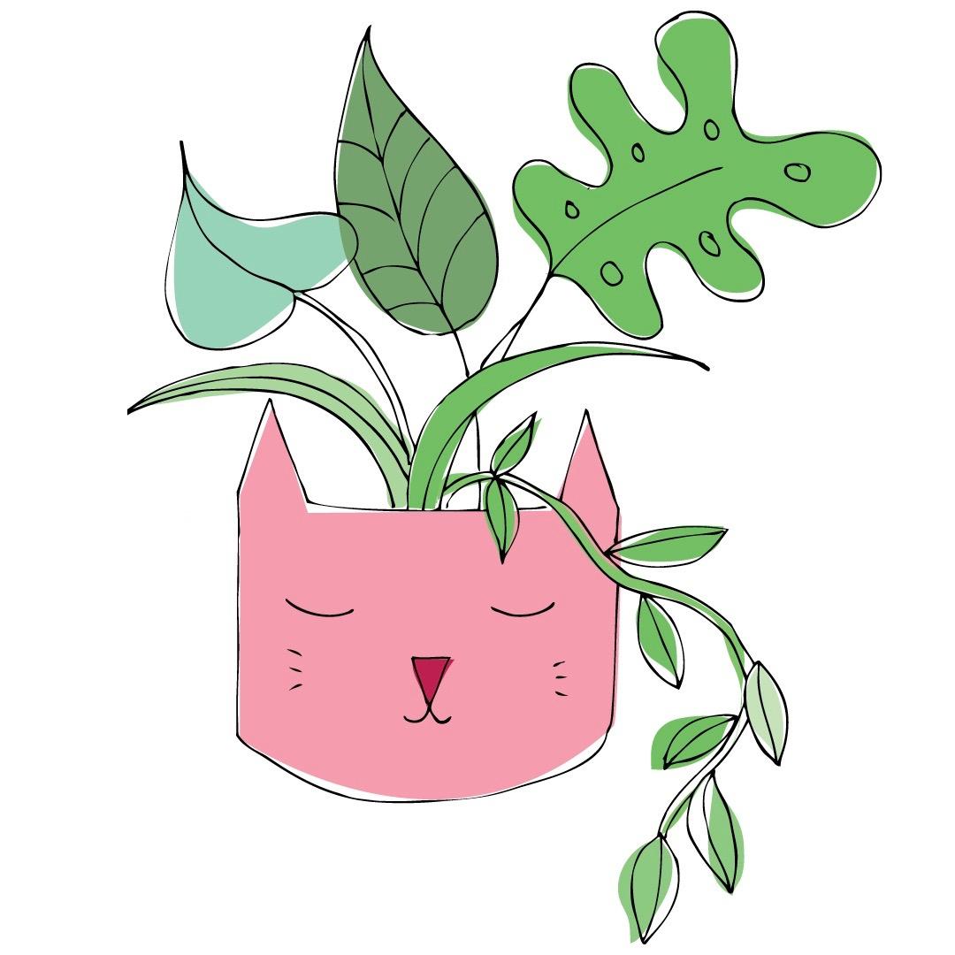Catpotplant.jpg