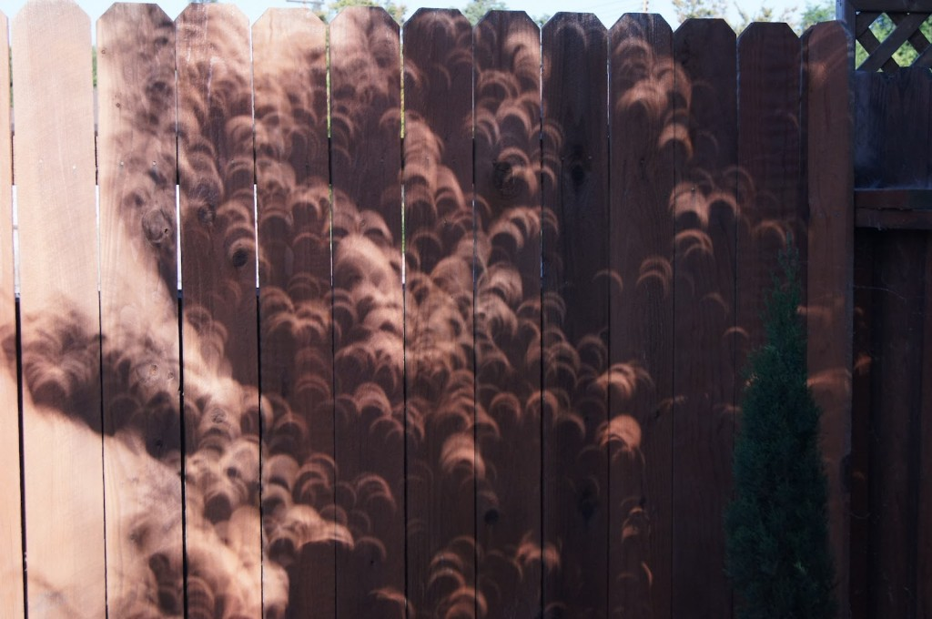 Solar-Eclipse-Crescent-Shadows-Fence-1024x680.jpg