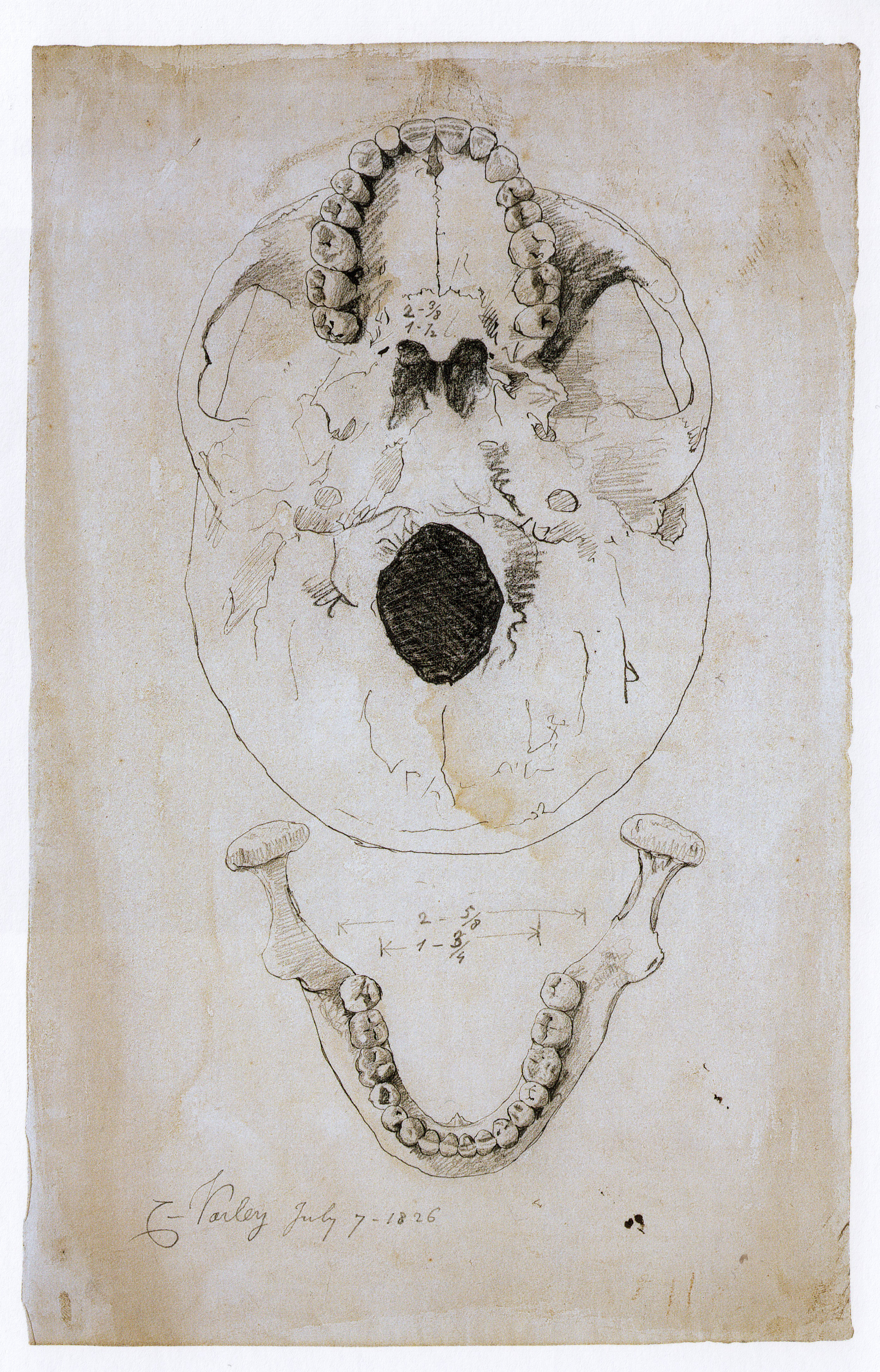 Cornelius Varley, Measured Drawing of Skull (1826). Made to demonstrate the Patent Graphic Telescope's ability to execute precise, measured drawing.