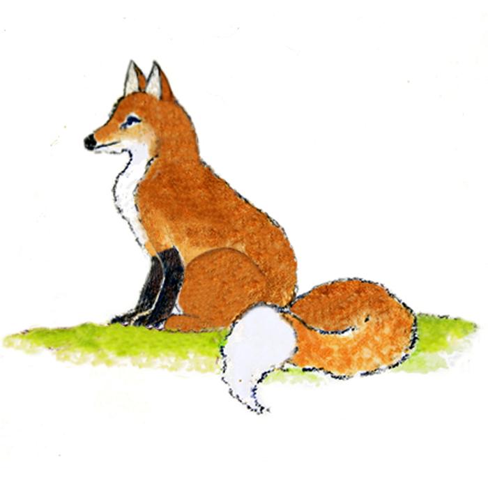 700-Fox-1.jpg