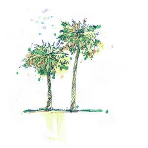 Palm-trees-2-300x300.jpg