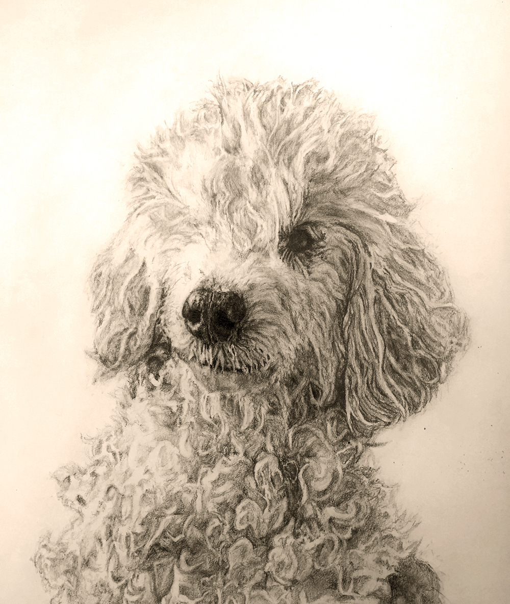 Mechanical Pencil   This is a drawing done for Action Bronson of his recently passed dog, Coco.