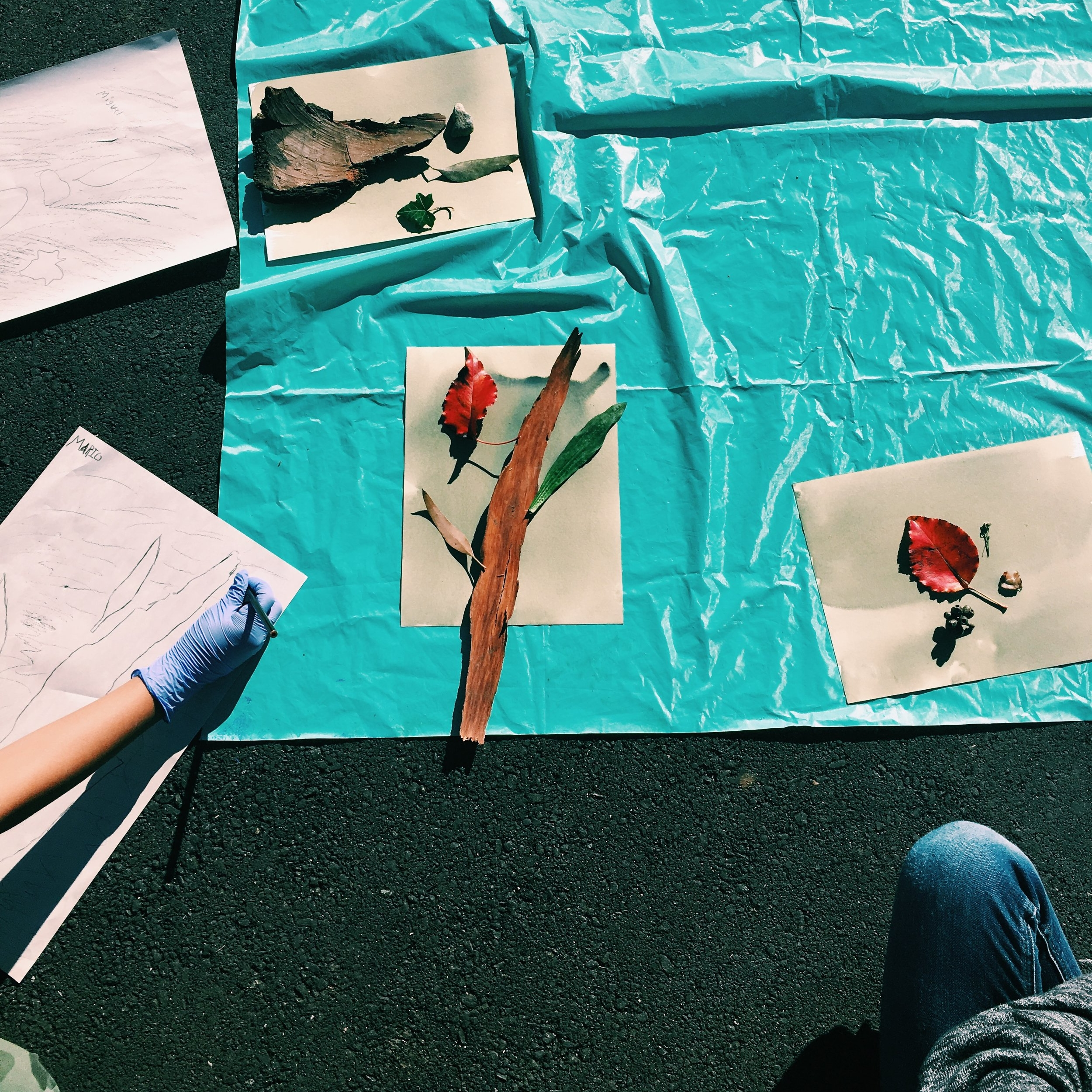 Cyanotypes from found objects