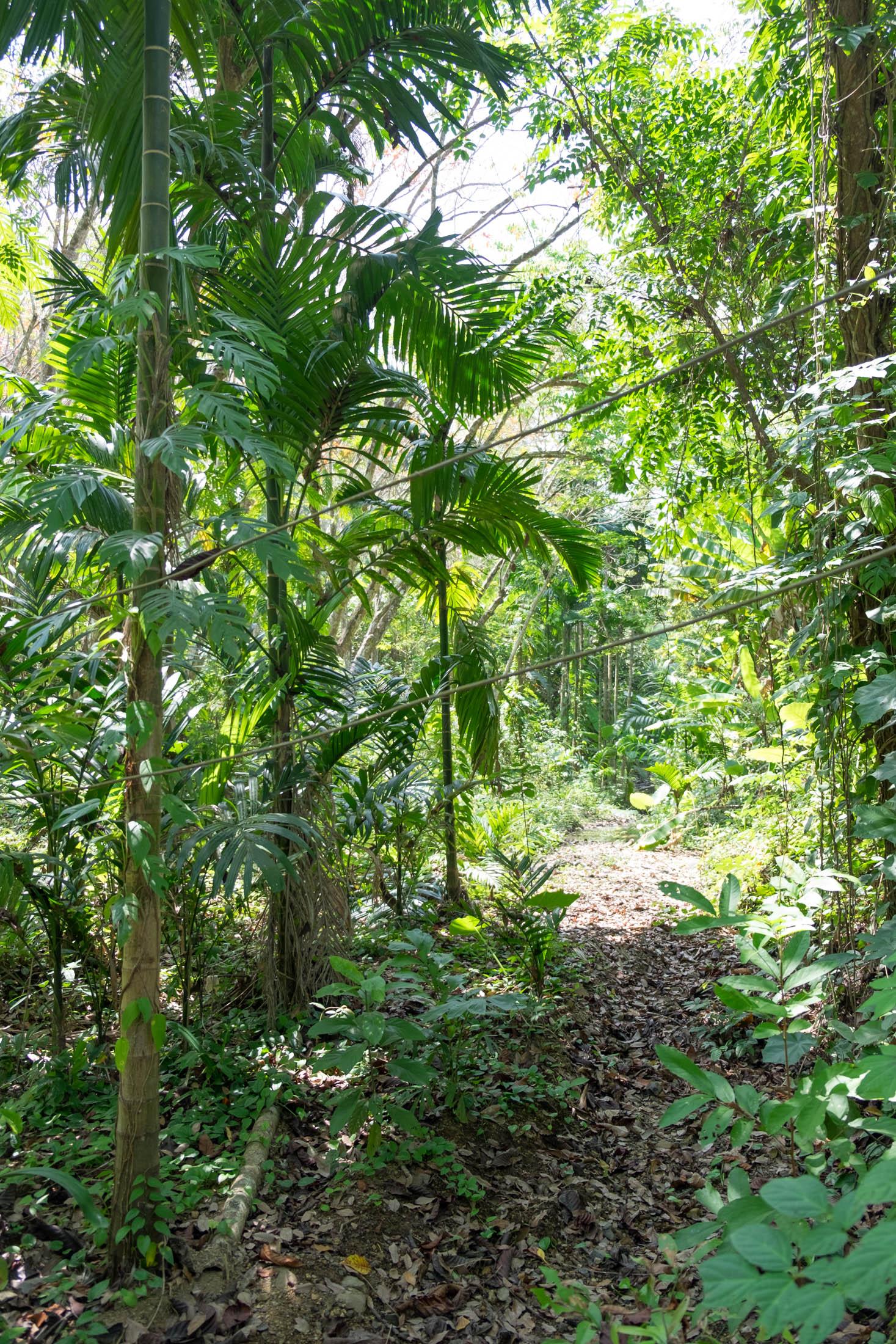 KohMook_Jungle-7.jpg