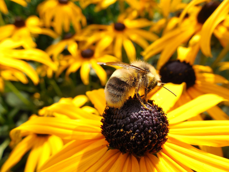 flower-266731.jpg