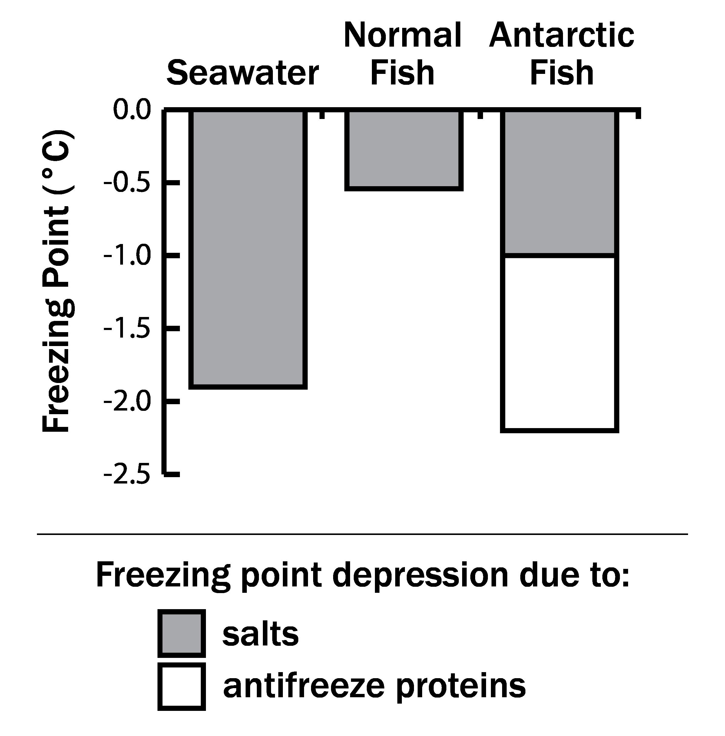 Antifreeze_Fish-01.png