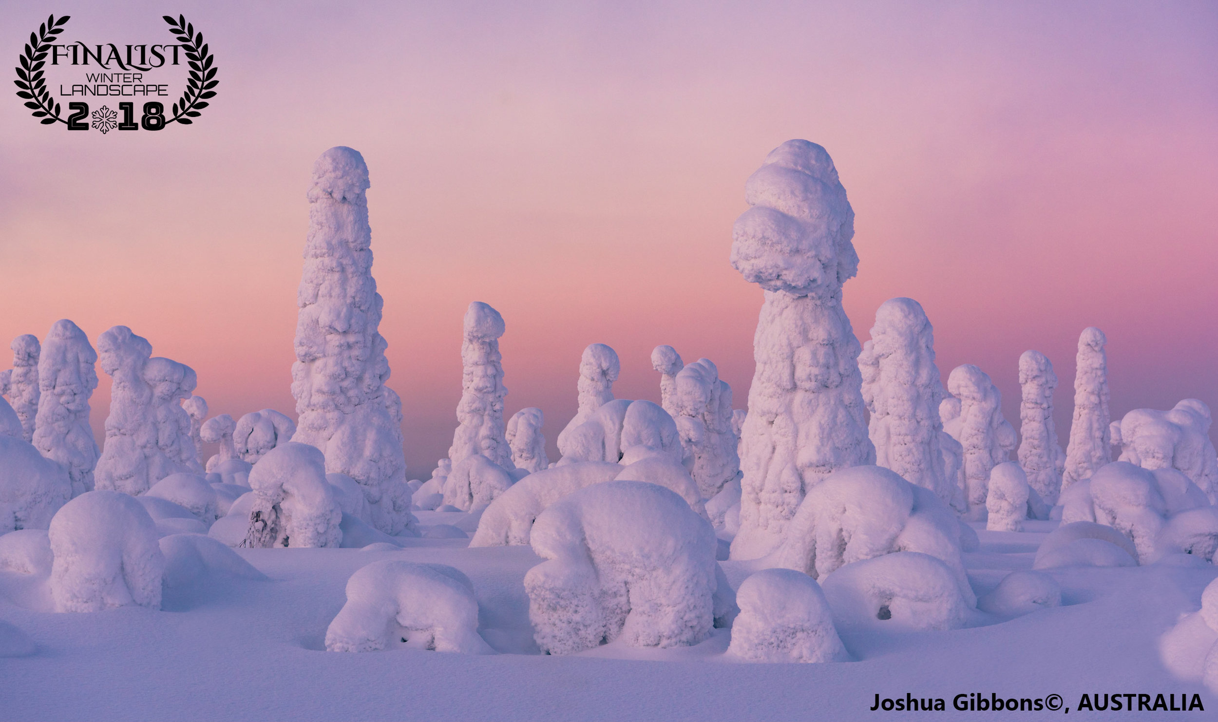 """'Candyland'  """"A scene from a Dr. Seuss book brought into the real world. Crown snow completely encapsulates the forest in Kuntivaara Fjell, Finland. Due to the shallow angle at which the sun sets at high latitudes, the normally fleeting vibrant afterglow of the sunset lingered for thirty minutes.""""  Photographer: Joshua Gibbons, AUSTRALIA"""