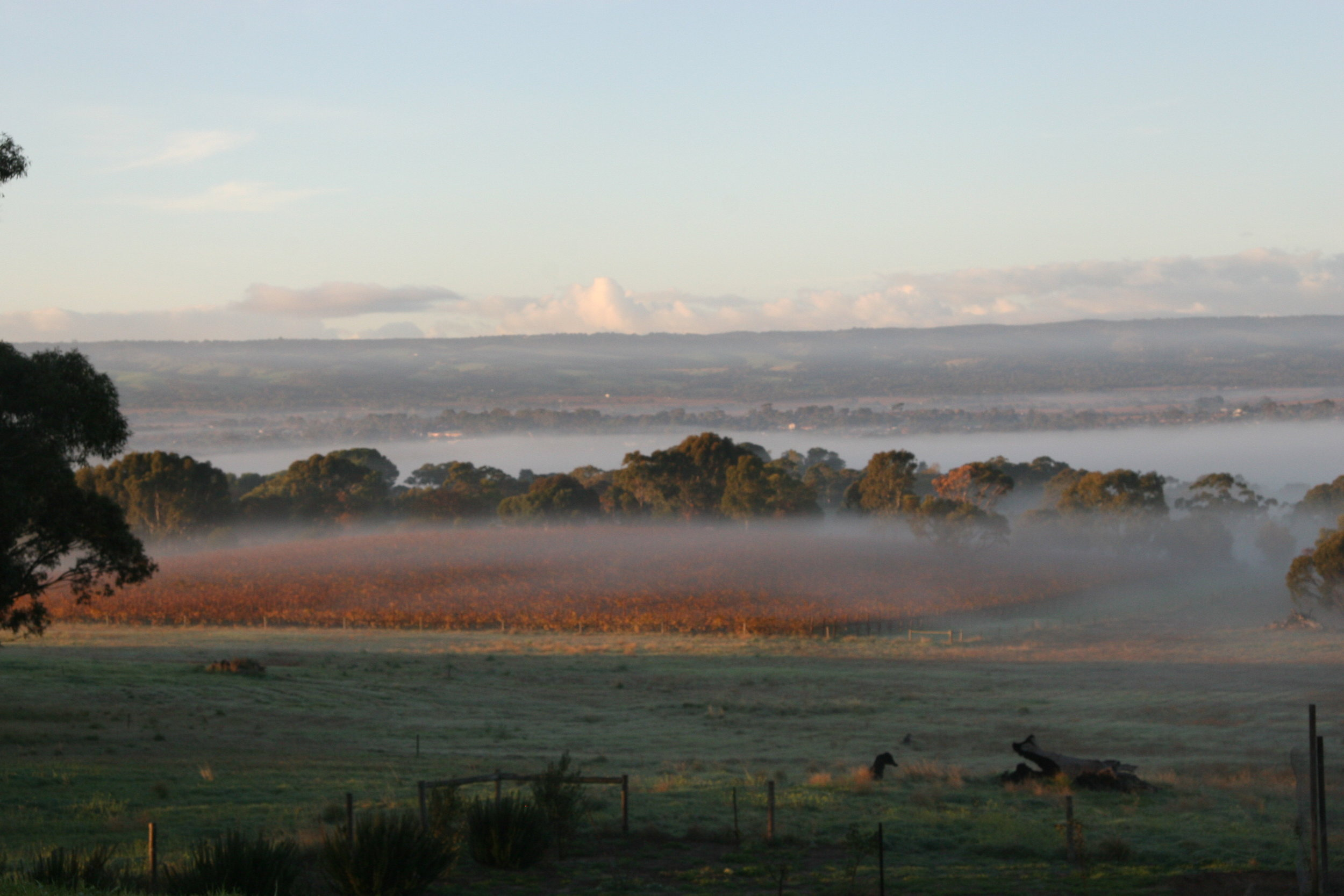 Morning Fog Colour MCLAREN VALE.JPG