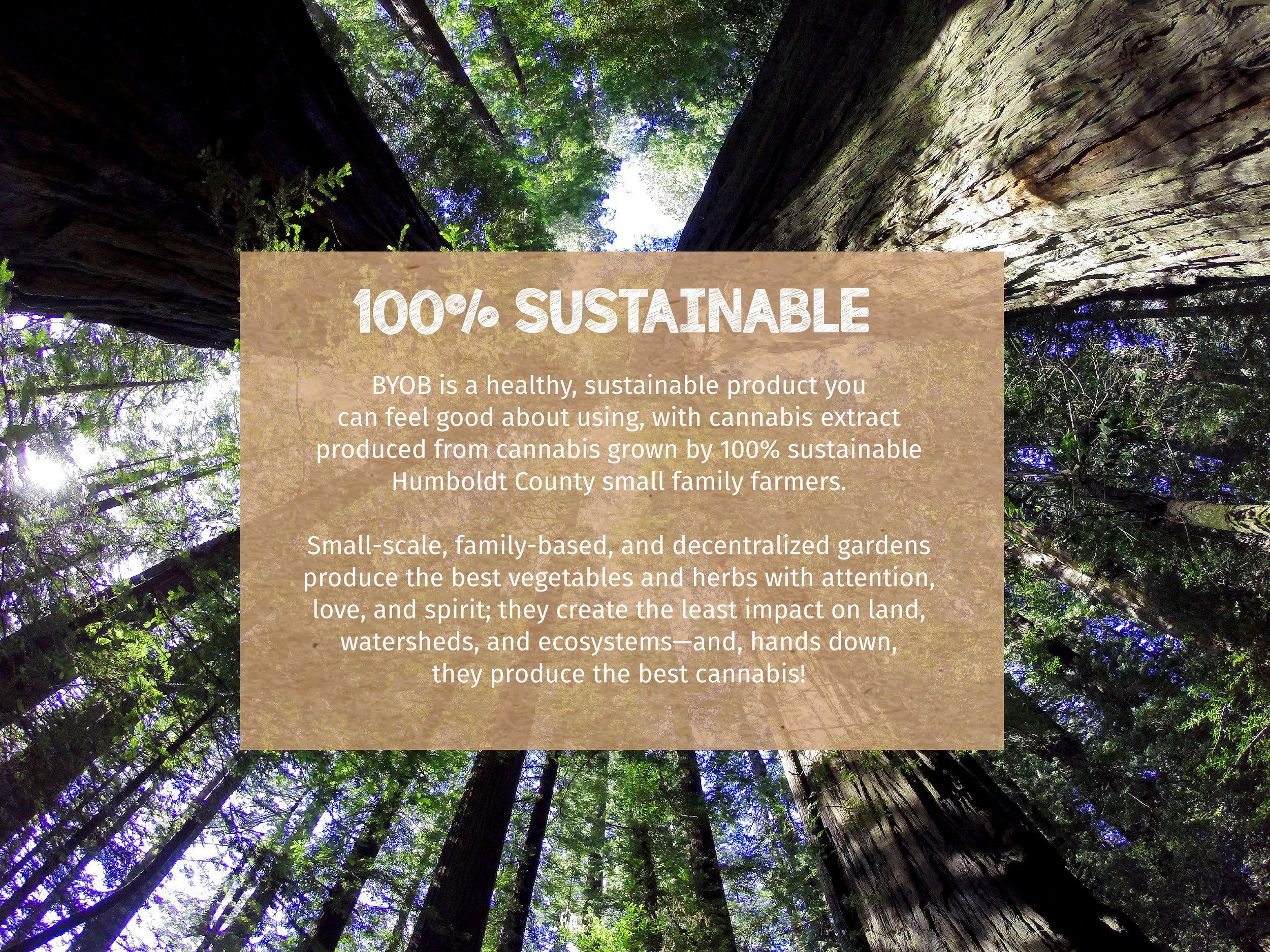 Redwoods3.jpg