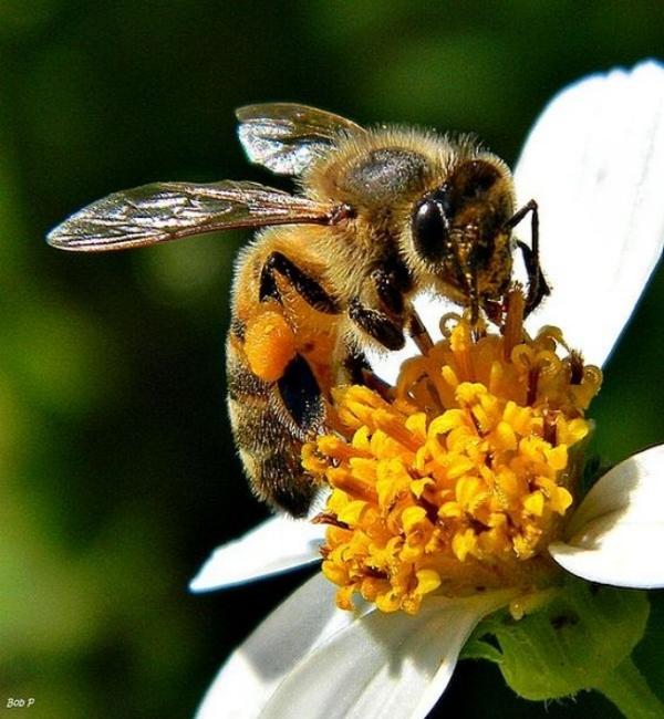 bee for website.jpg