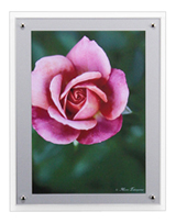 FloralSeries-6