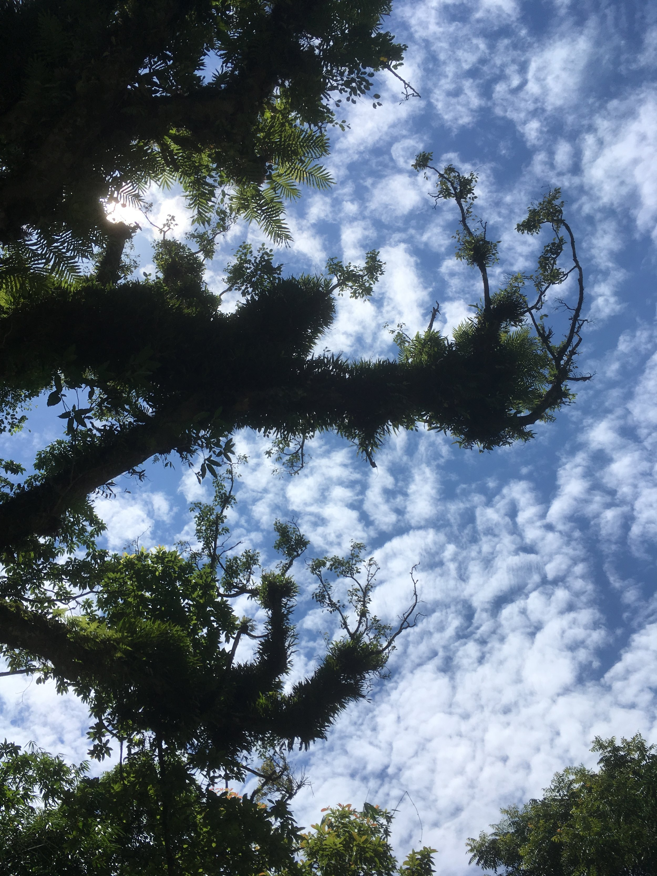 Epiphytes (plants that grow on other plants)
