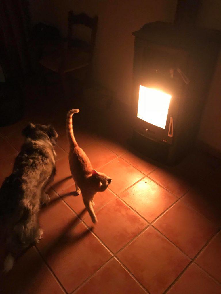 gato-y-perro-1-768x1024.jpg