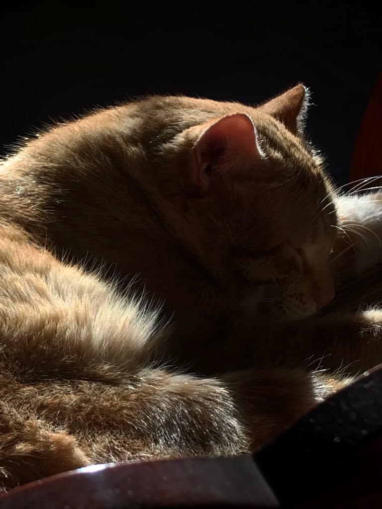 gato durmiendo.jpg