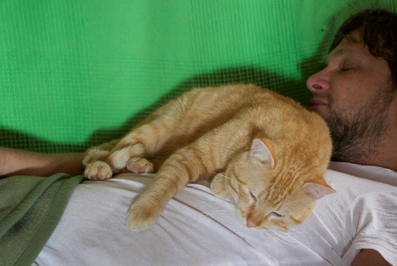 Si el gato se me pone arriba a ronronear y a dormir, caigo nocaut en el acto.