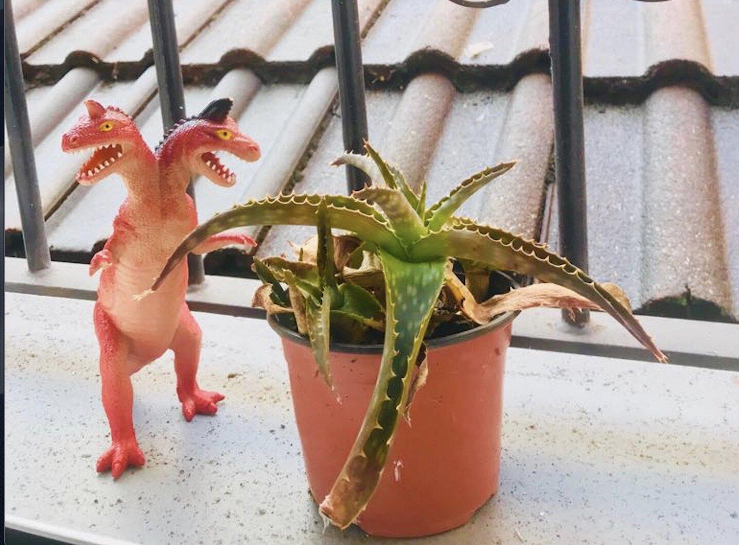 Cactus: menos mal que en Asturias llueve a menudo, si no estarías perdido.