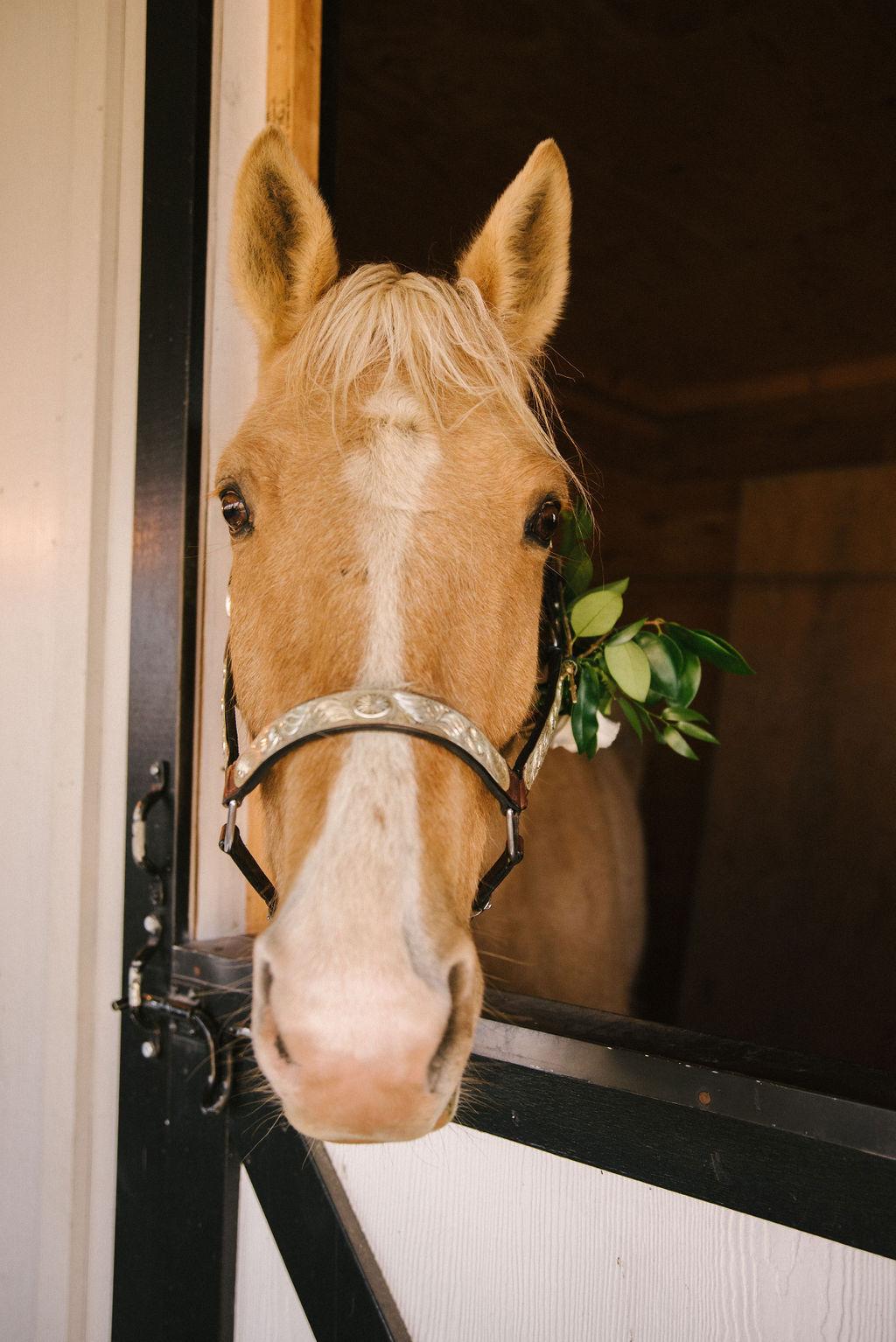 brielle-davis-events-shadow-creek-wedding-annie-david-horse-gus.jpg