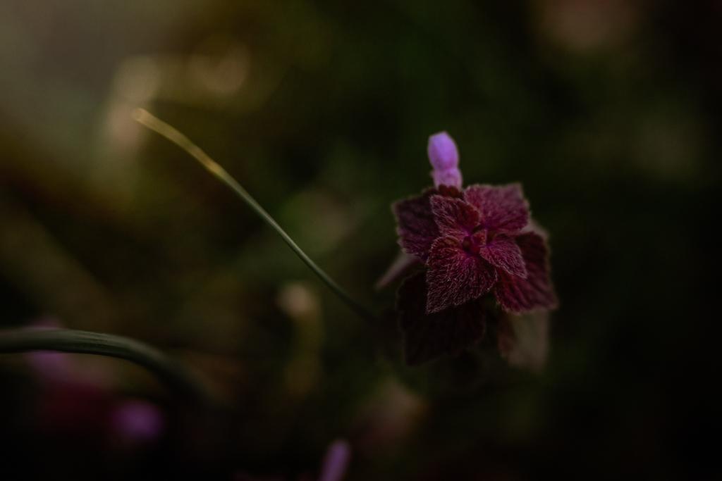 macroflower_2019.jpg