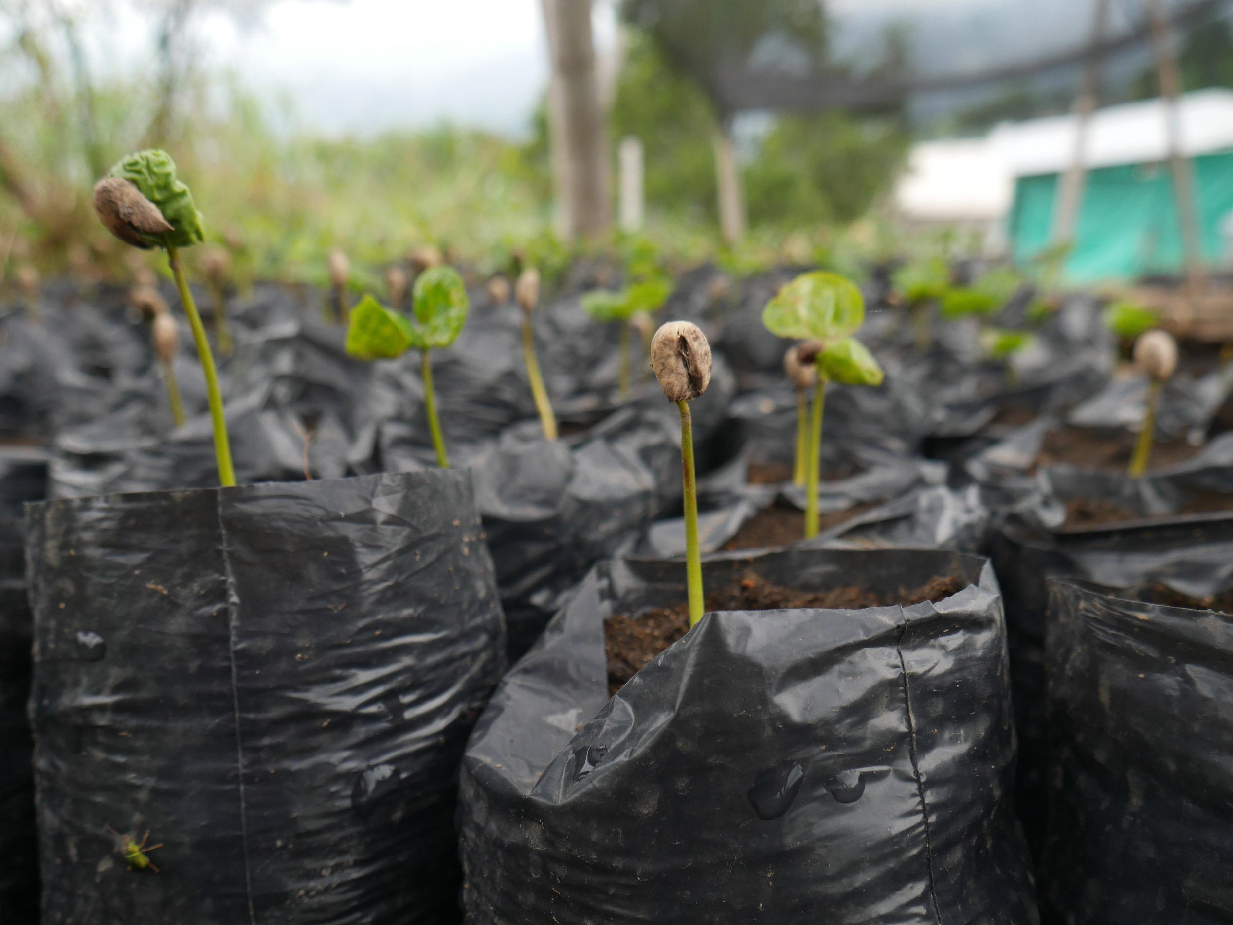 Seedlings .JPG
