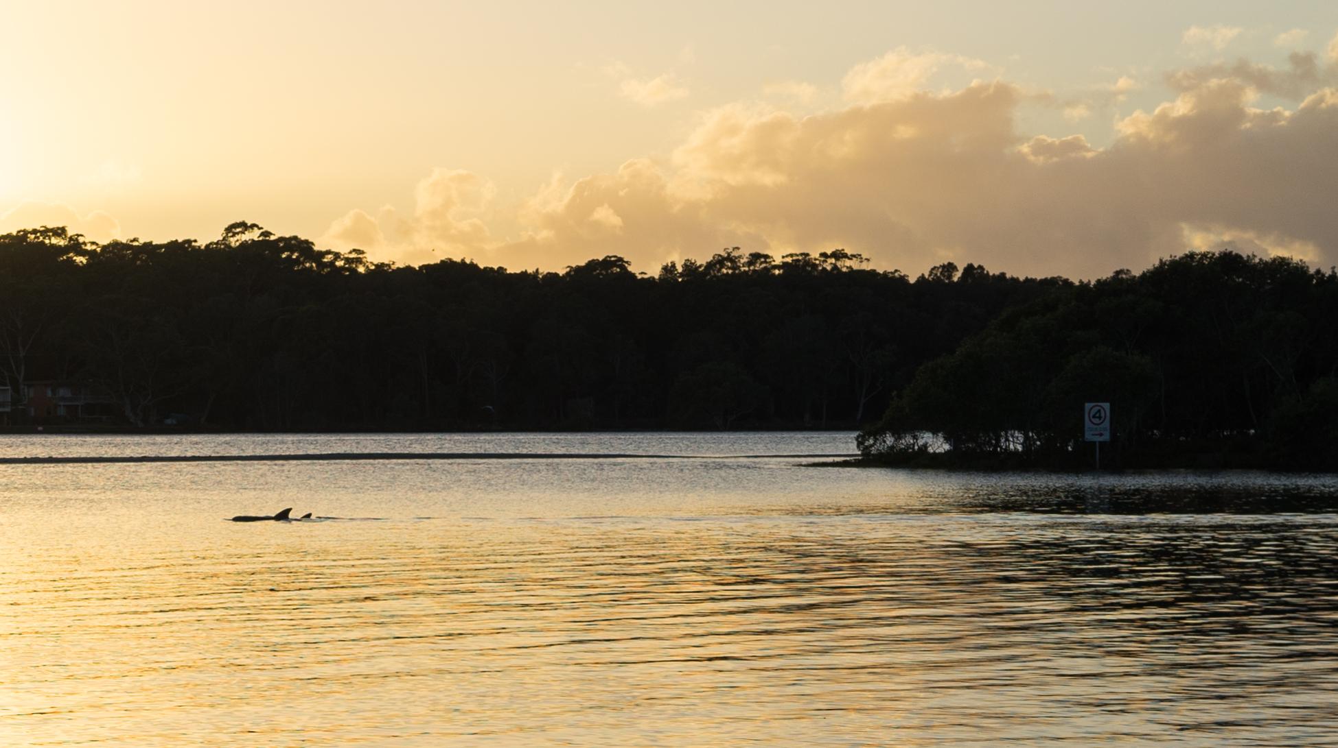 dauphin australie