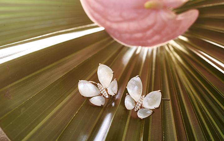 Tropical Butterflies_LR.jpg