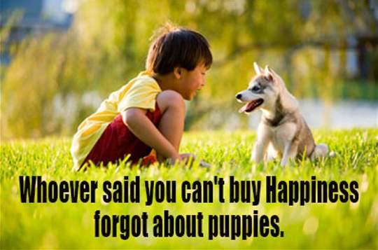 Importance Dog Blog 3.jpg