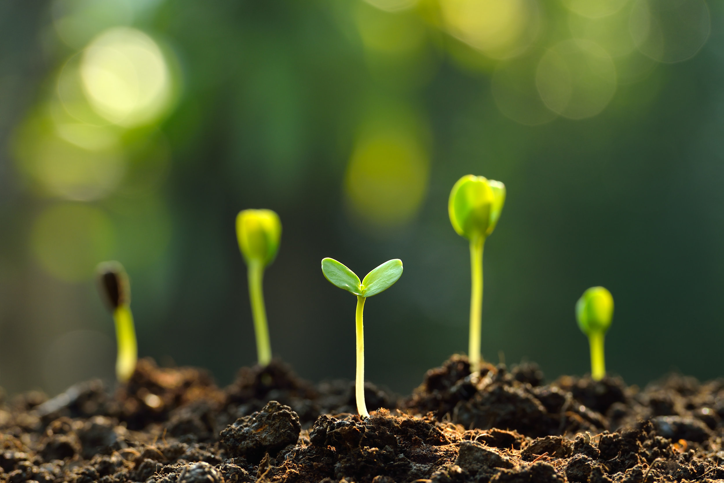 Spreading your marketing seeds