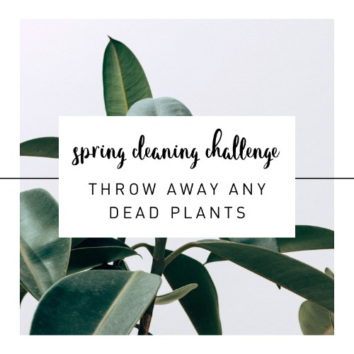 Get some fresh new plants! Do away with the old or dead plants on your patio/balcony.