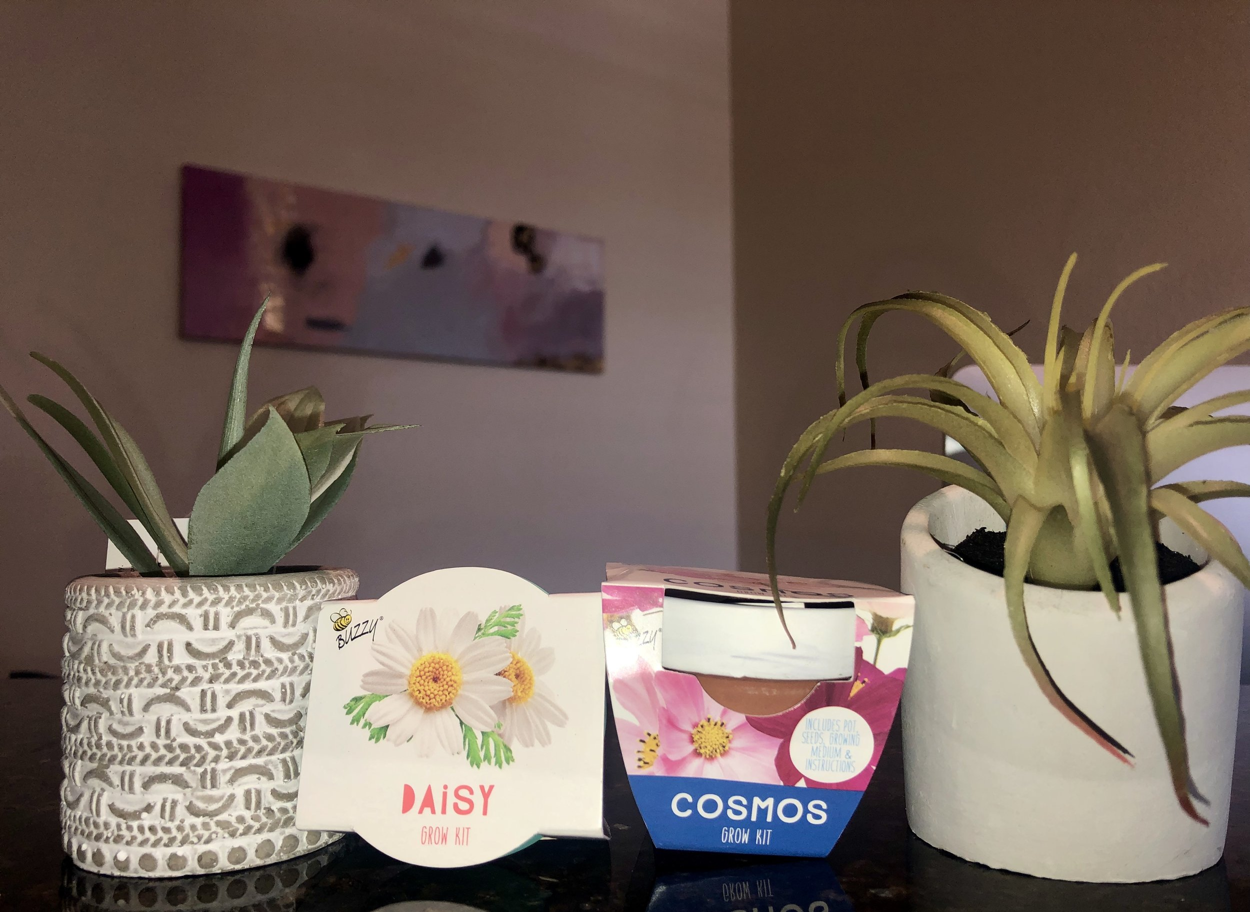 Check out these adorable little grow kits and potted succulents we found at  Target ! Very budget friendly options in the dollar section, let me tell you ;)