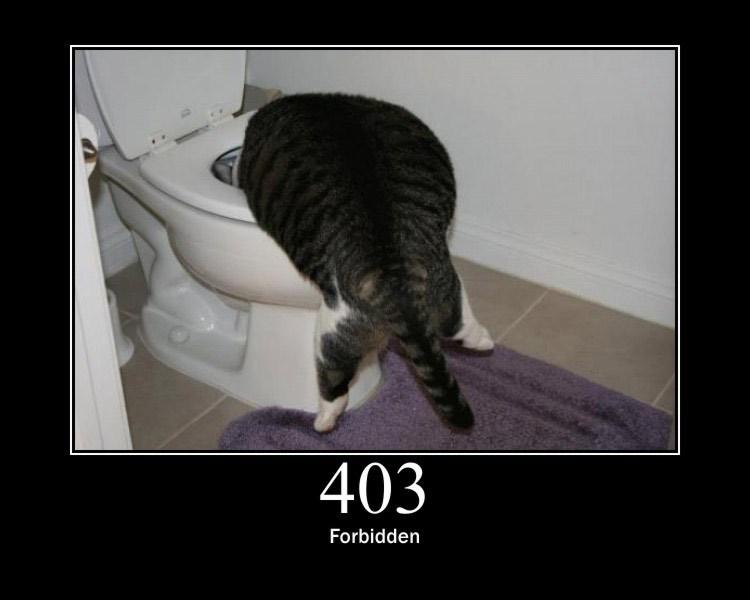 403 (1).jpg
