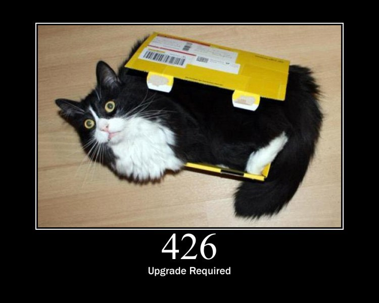 426.jpg