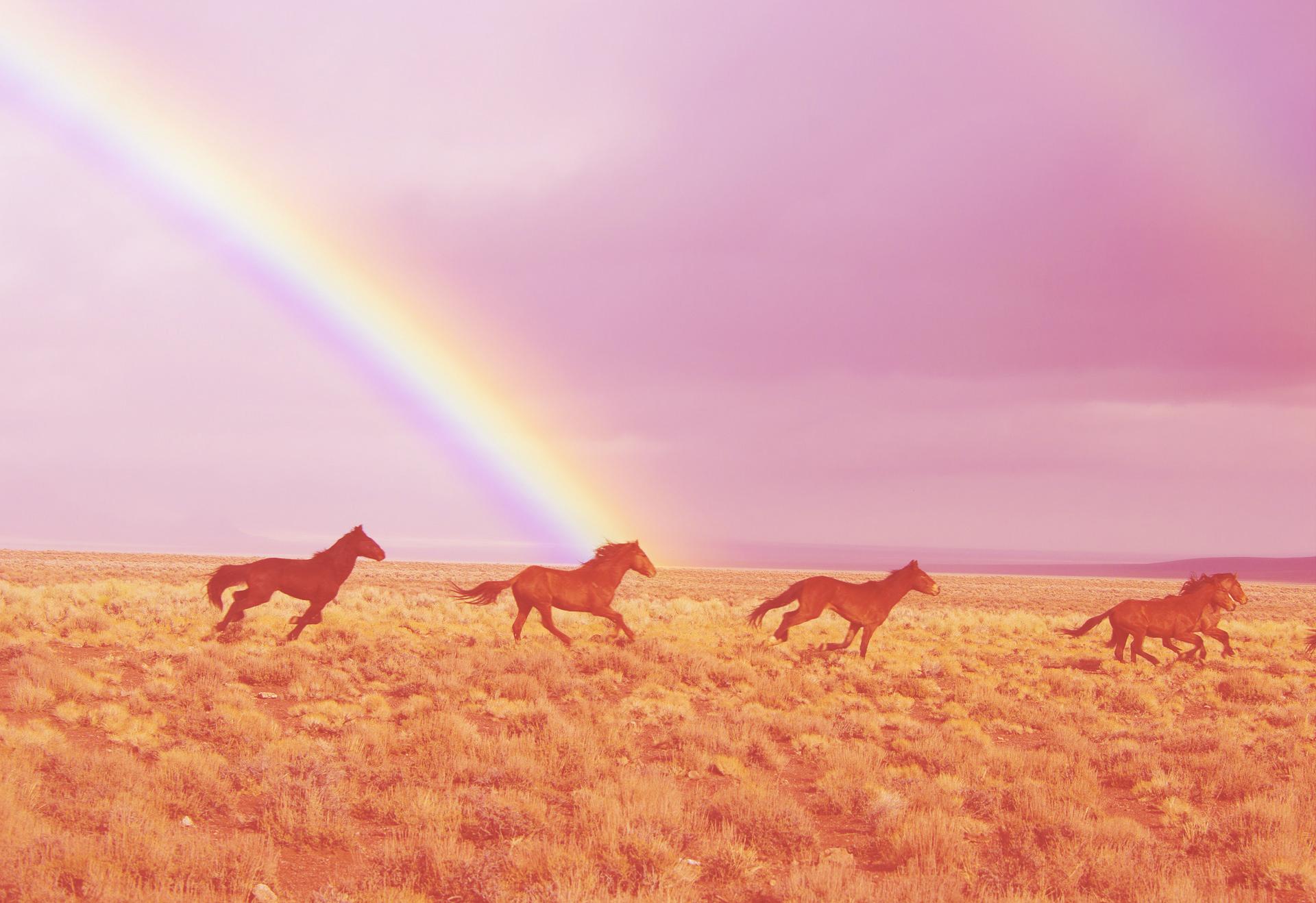 wild-horses-2239420_1920_color.jpg