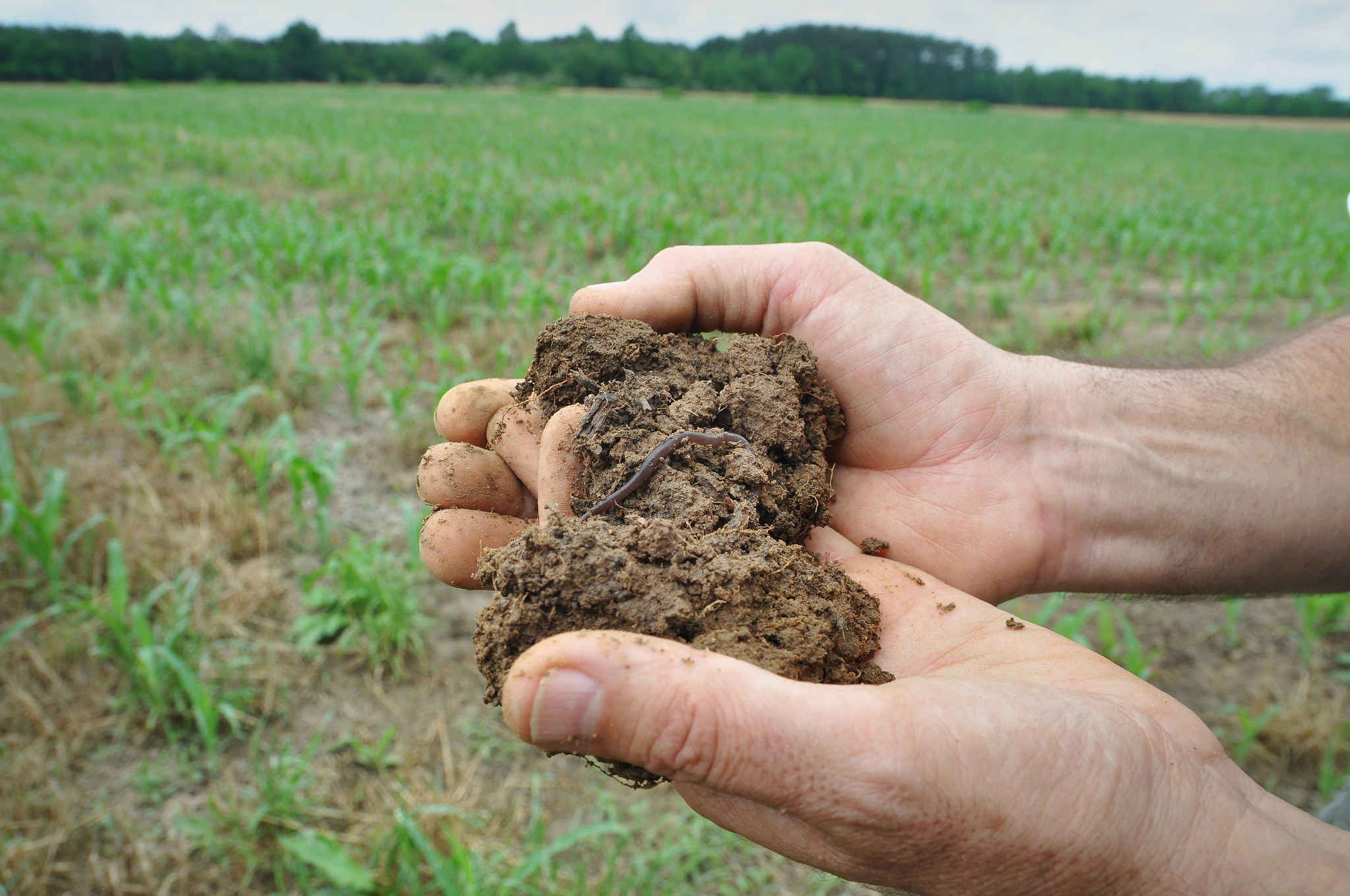 NACD Soil Health Research - Research newly released by NACD and Datu Research finds using cover crops and/or no-till can result in an economic return of over $100 per acre.