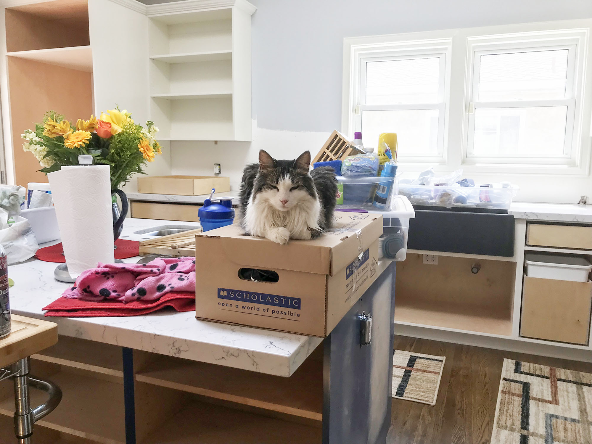 One of our client's cats enjoying the new kitchen island during installation.