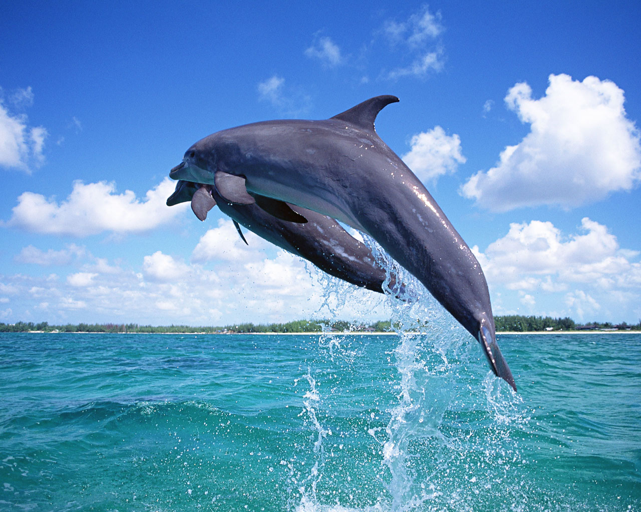 Sight Seeing Boat Tours & Dolphin Watching