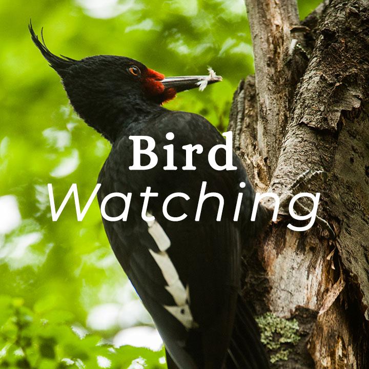 N.Patagonia-bird.jpg
