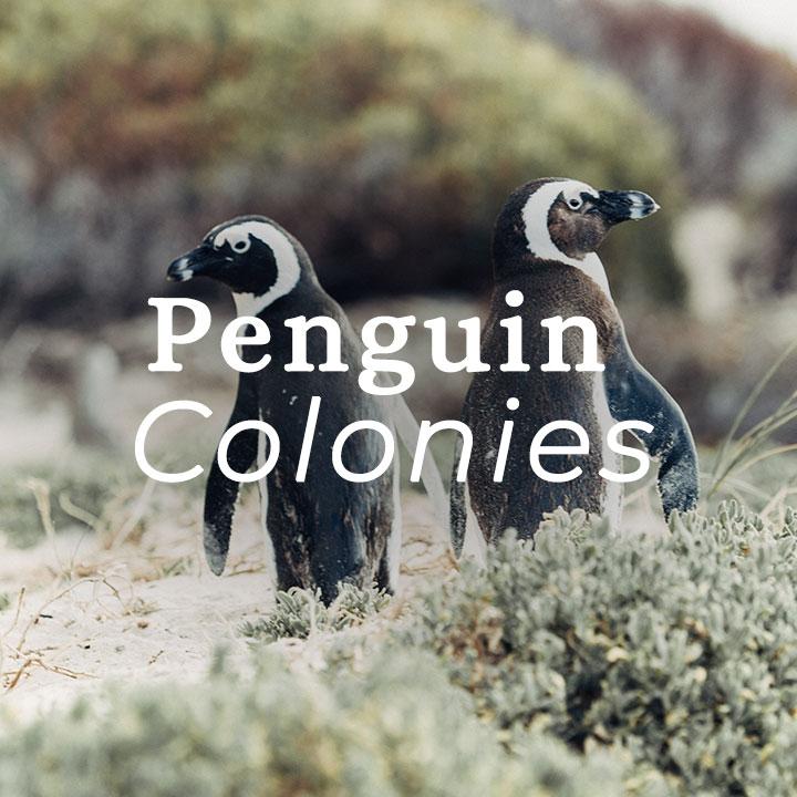 S.Patagonia-penguin.jpg