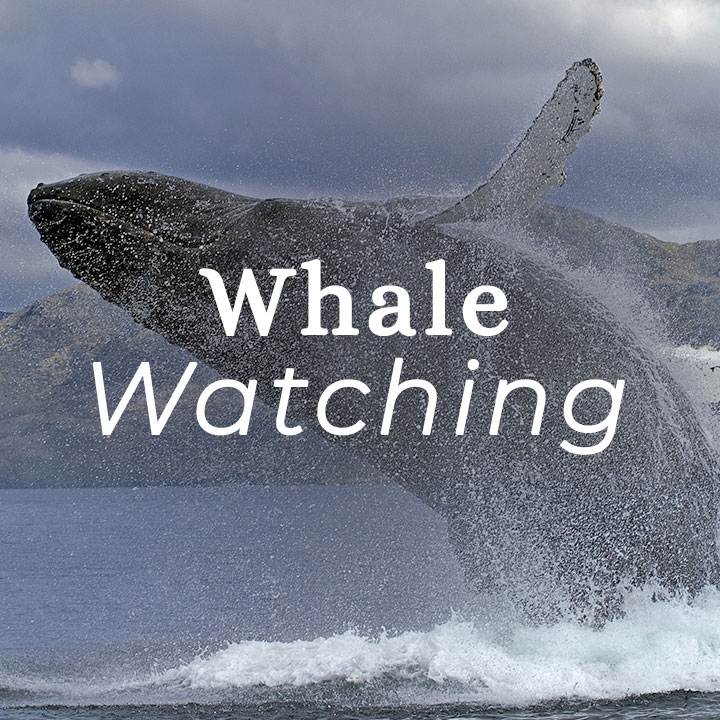 S.Patagonia-whale.jpg