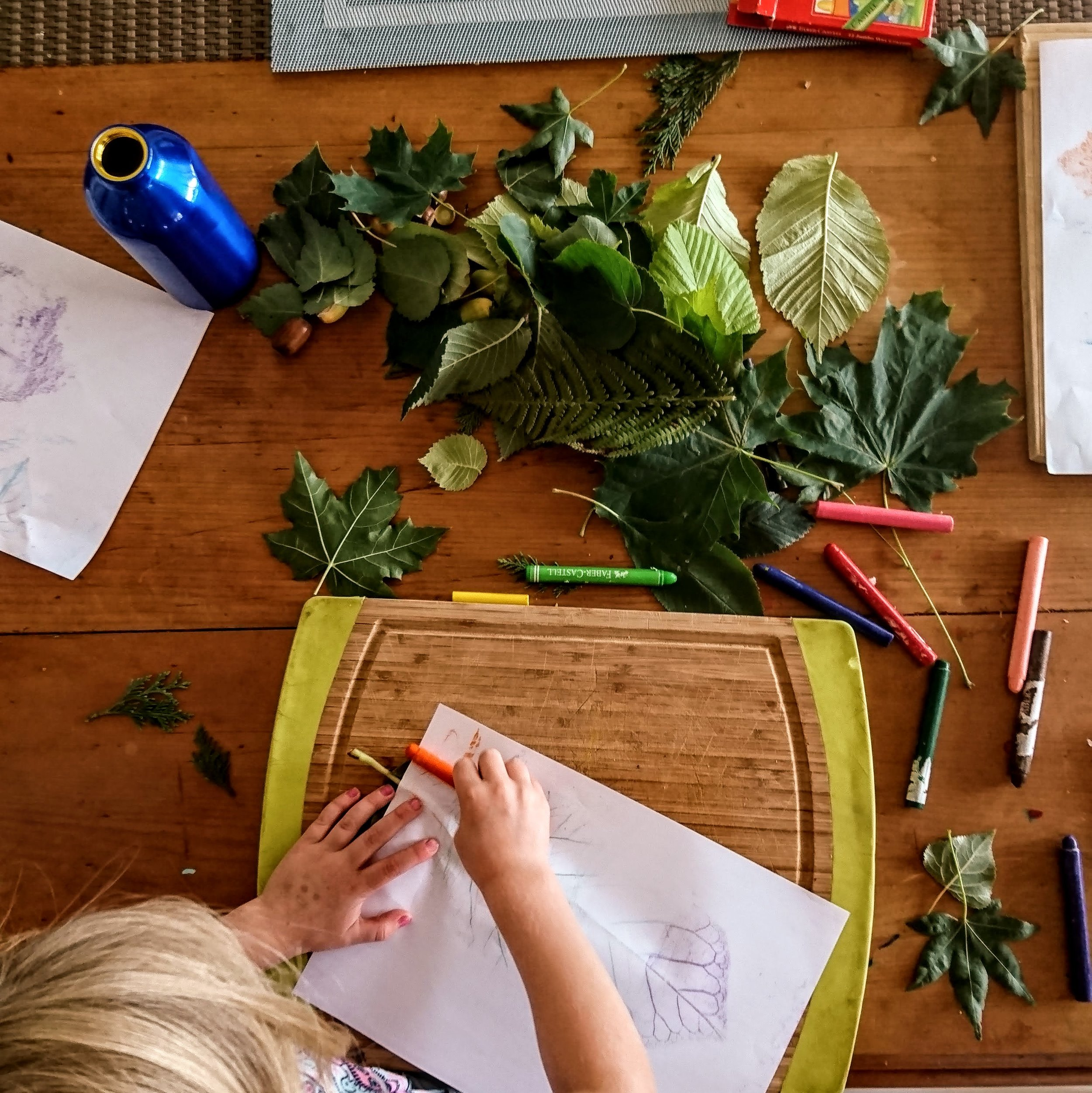 leaf rubbings art