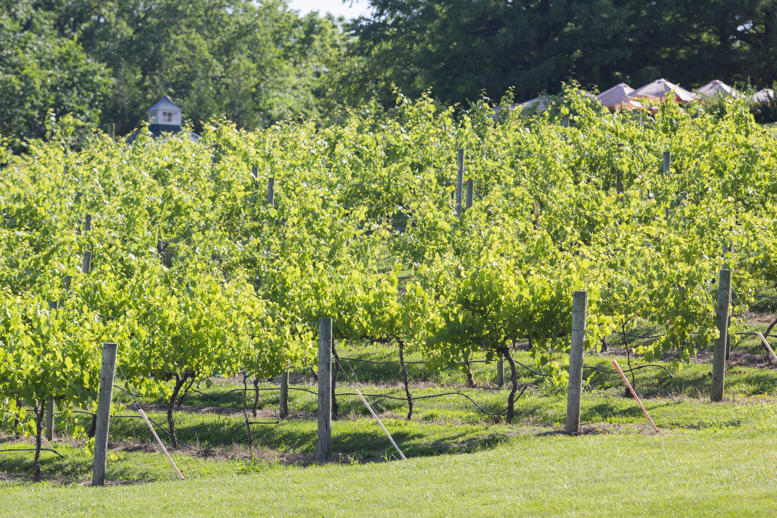 RolwesImages_Defiance Ridge Vineyard0638.JPG