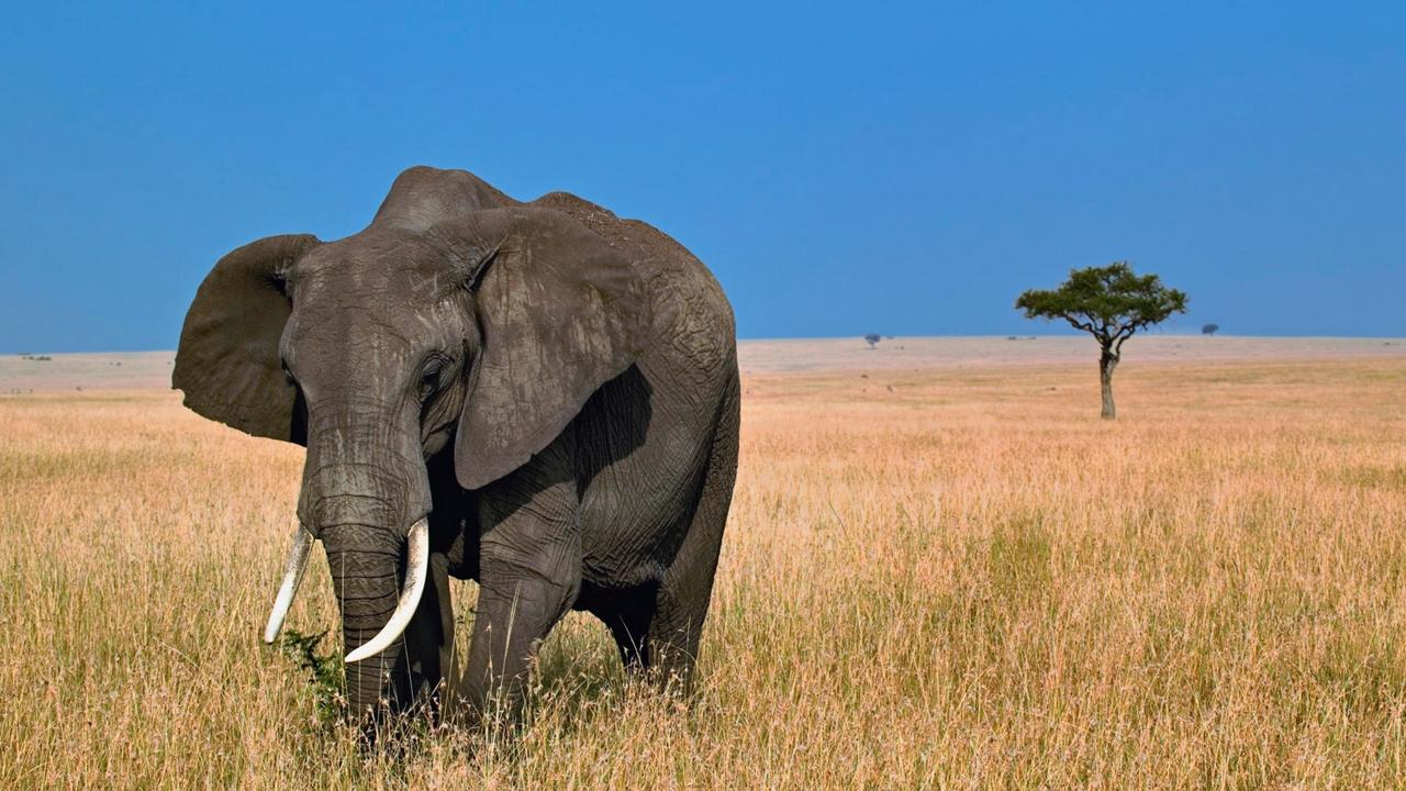 TV: Wildest Africa