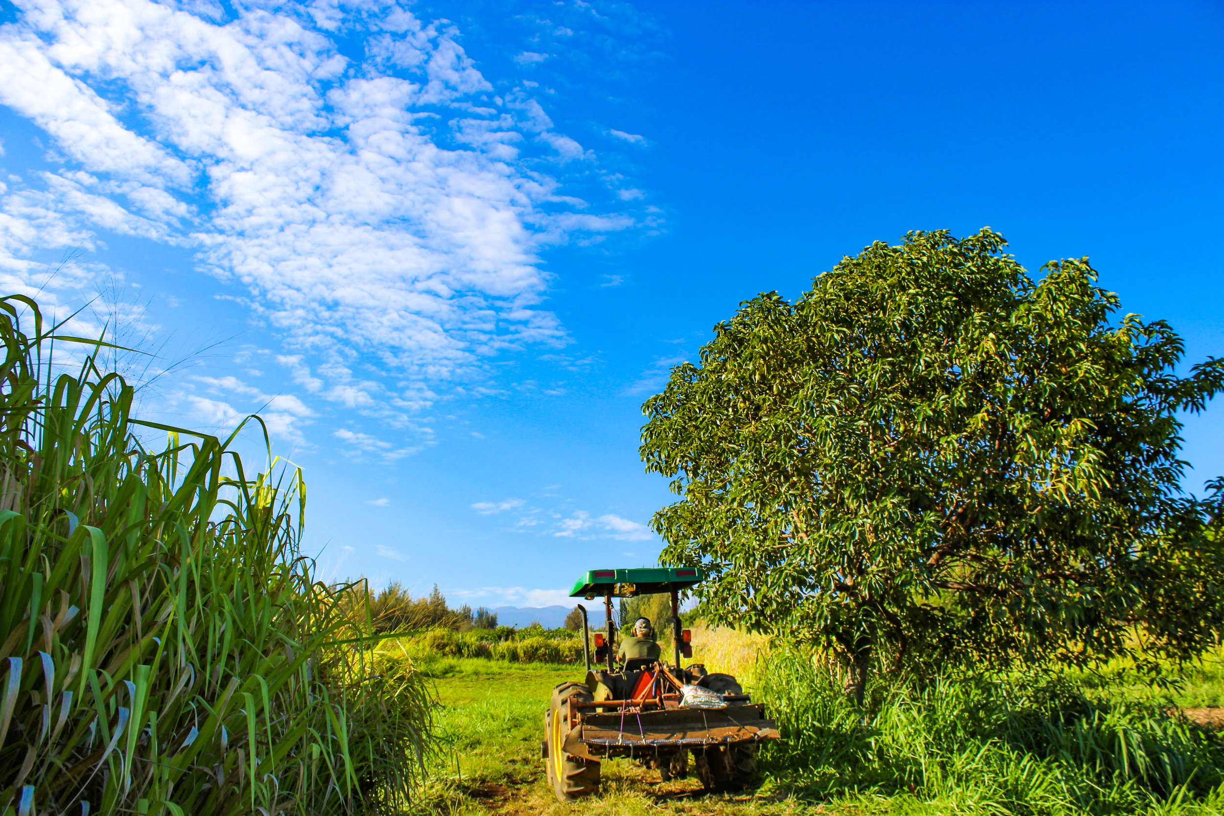 Michael on his tractor on the Mother Nature's Miracle farm in Pa`auilo with Mauna Kea in the background.
