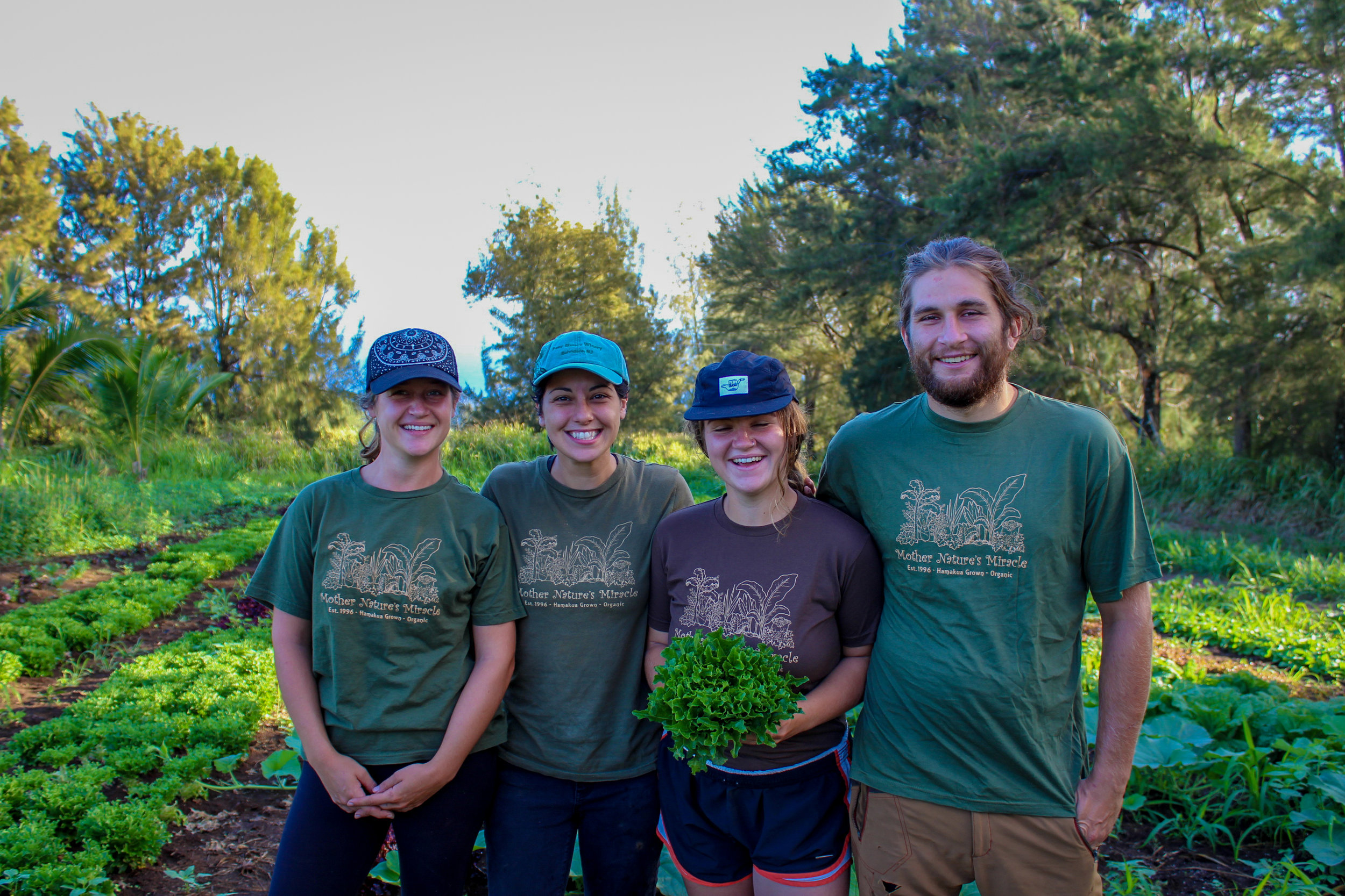 Mother Nature's Miracle team (L-R): Kelsey, Brandy, Jacki, and Dain picking lettuce on a harvest morning.