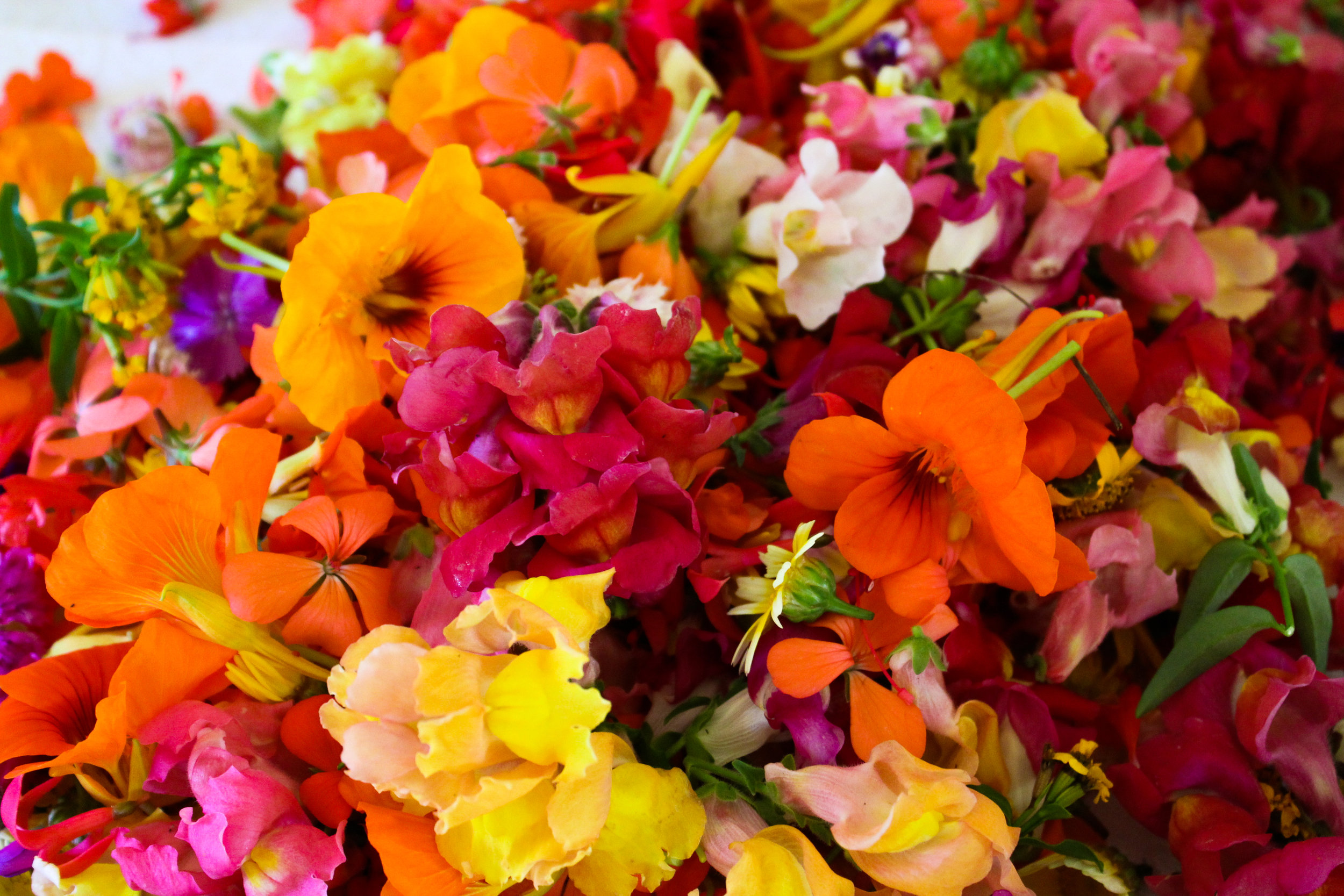 Edible Flowers organic Hawaii