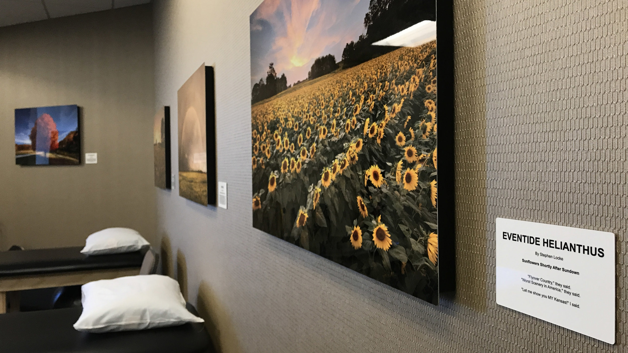 Eventide Helianthus in situ at KCB 24 x 36 on metal