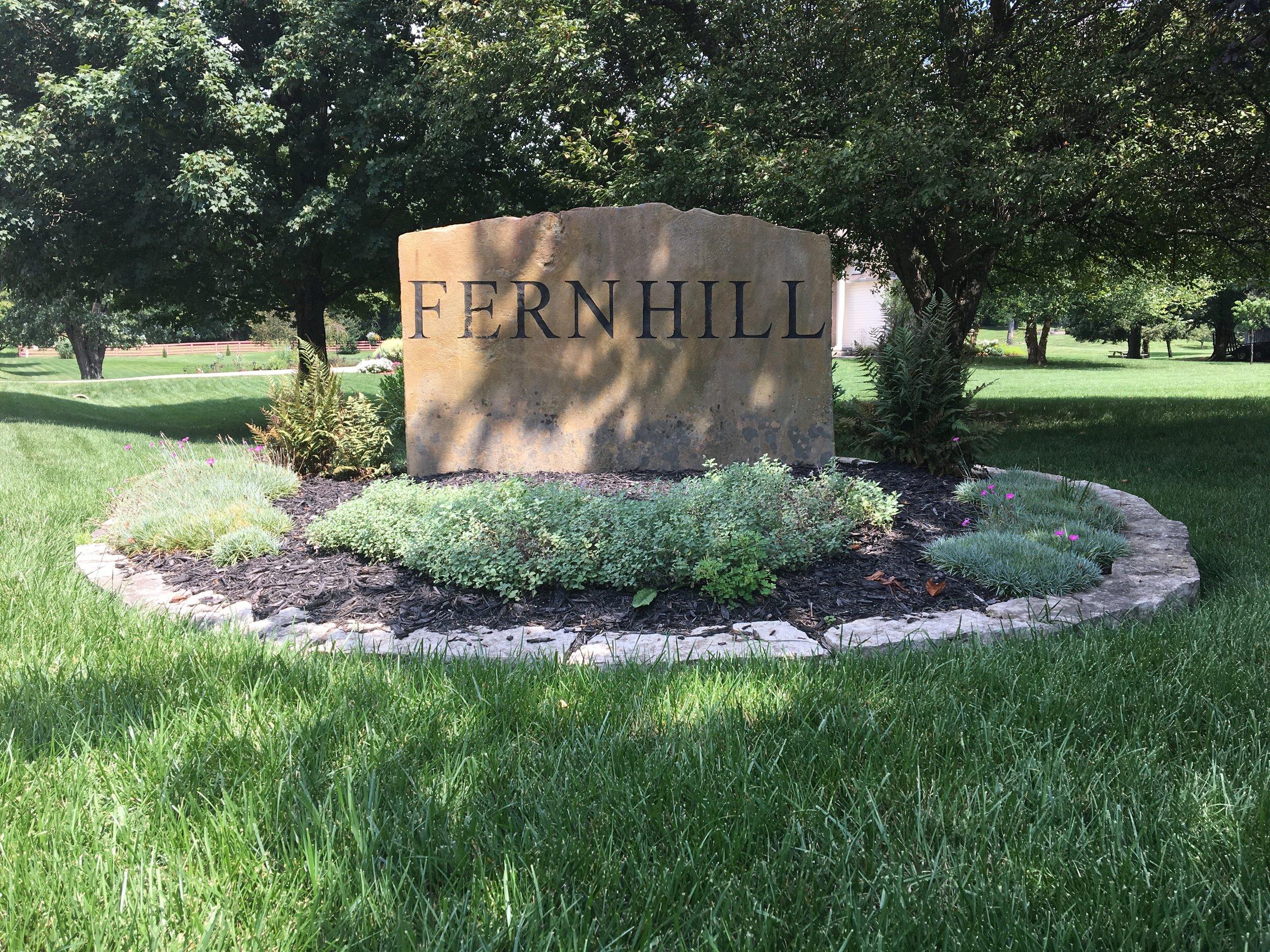 Fern hill -